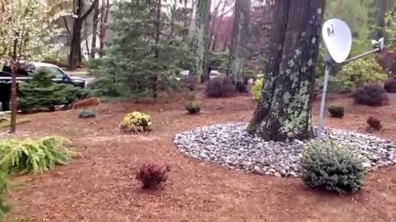awesome how to get grass to grow Part - 5: awesome how to get grass to grow images
