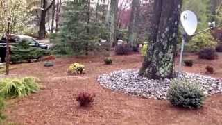 Landscaping tips and inspiration | Why can't I get grass to grow you ask? Find an alternative!!