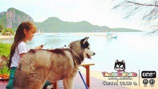รายการ The Animal Lulla ช่อง one HD ES.56