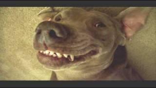 Super Britney  My Super Cute  Dog Smiles