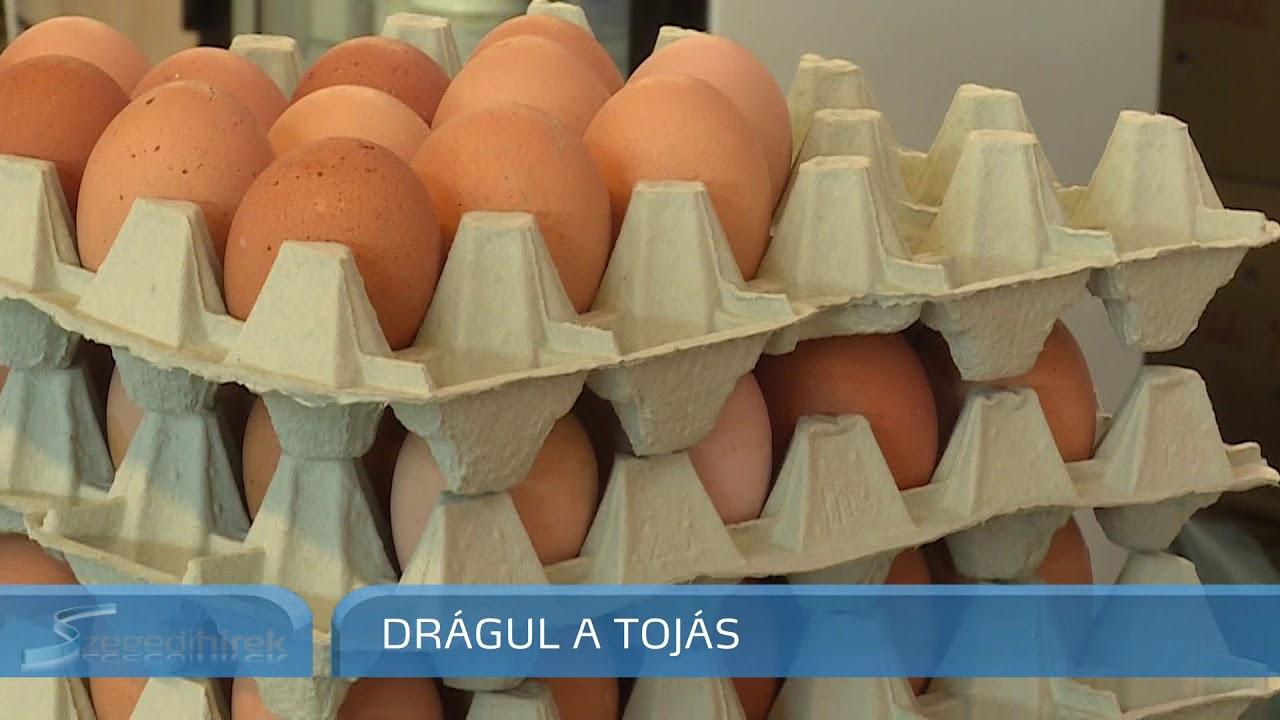 Megtermékenyítetlen tojás kerekesférgek kezelése