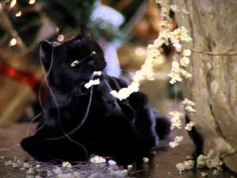 Как зовут кота ведьмы