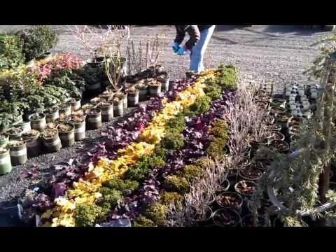 Bates Nursery Plants Ready To Ship From Monrovia Oregon Docks