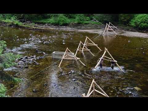 Sustaining Sockeye - William Atlas - Simon Fraser University