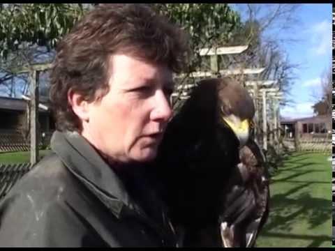 Wild with Sasha Norris. Episode 21 - Birds Of Prey
