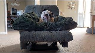 reuben-the-bulldog-biding-his-time