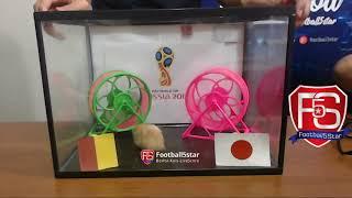 Prediksi Belgia vs Jepang bersama PO si Hamster