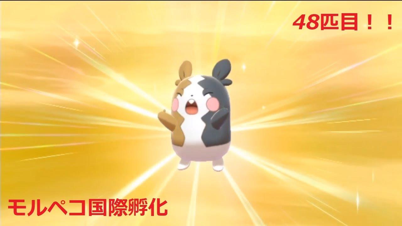 【ポケモン剣盾】48個目のたまごで色違いモルペコが生まれた!!【国際孵化】