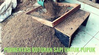 Membuat Pupuk Organik Dengan Kotoran Sapi / Tletong