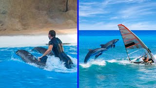 Why Dolphins are the Some of the MOST INTELLIGENT Animals on Earth!