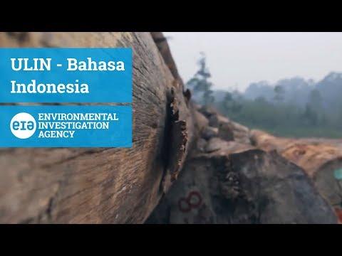 ULIN - Bahasa Indonesia