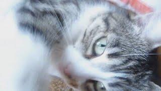 Видео нашей Кошки // Жизнь в деревне