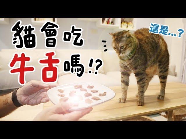 黃阿瑪的後宮生活-貓會吃牛舌嗎
