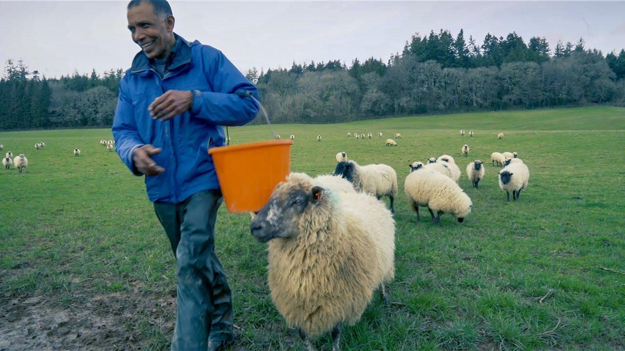 Sheep Farmer Chooses Sanctuary Over Slaughter