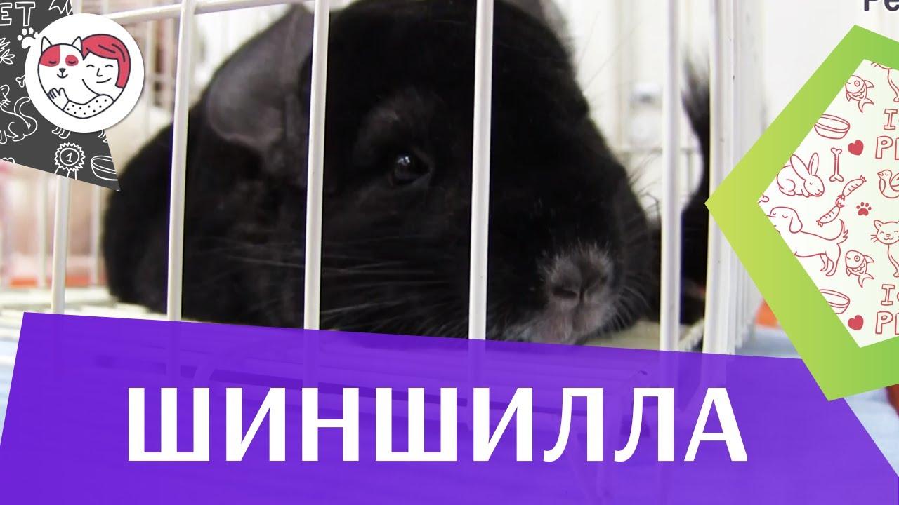 клетка для кролика Секреты разведения кроликов фильм ВЛАДИМИРА .