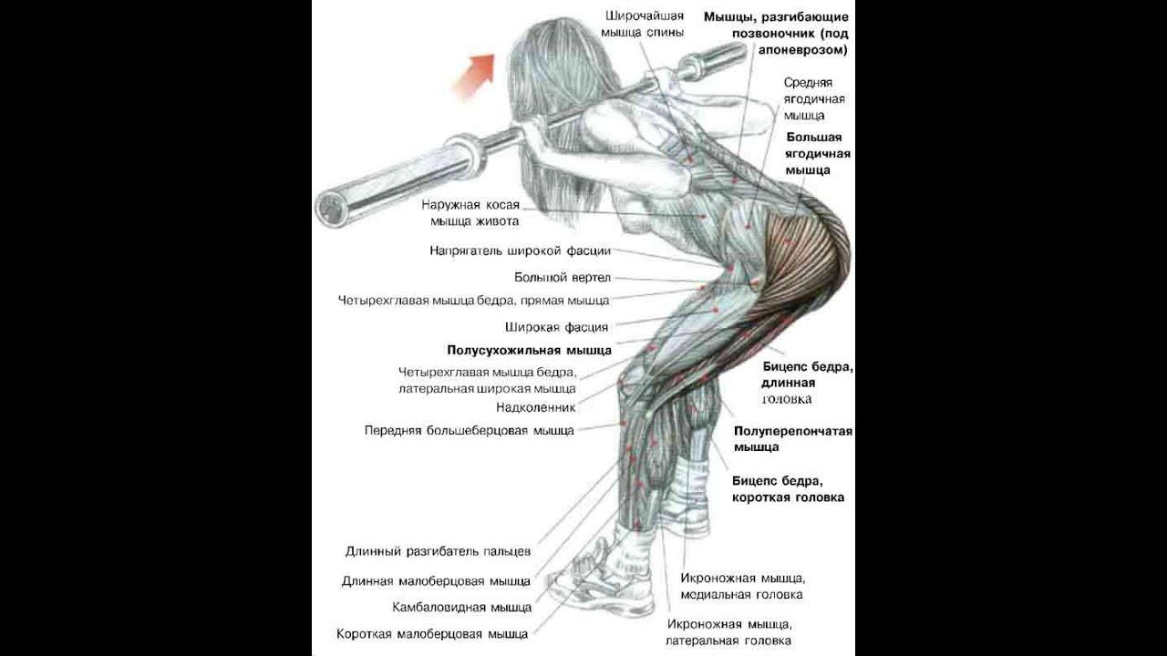упражнения спины и бицепса яркие