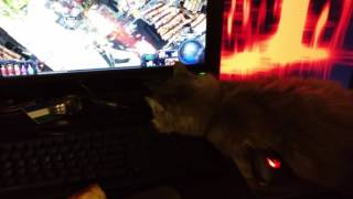 How To Oro Flicker Guide, A Primer On Hold-RMB Strats - Step 1: Acquire Cat.