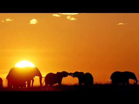 3 HOURS Best Relaxing Music  Africa  Shaman  Background, Relax, Sleep, Study, Meditatio