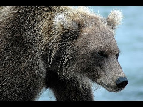 офигевший медведь