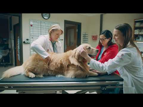 Lucky Dog: 2020 WeatherTech Super Bowl Commercial
