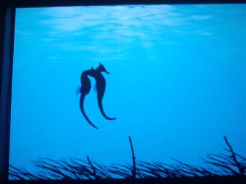 The Love Story Of Seahorses (Monogamy Of Hippocampus Whitei)