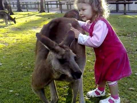 Are you Skippy?
