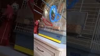Попугай и колокольчик Кузя в колоколе
