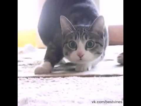 Музыка под которую танцует кот