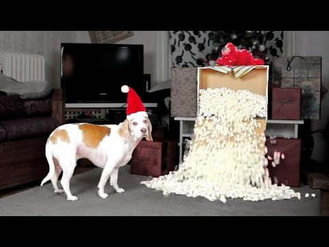 Dog Gets Popcorn Fountain for Christmas: Cute Dog Maymo