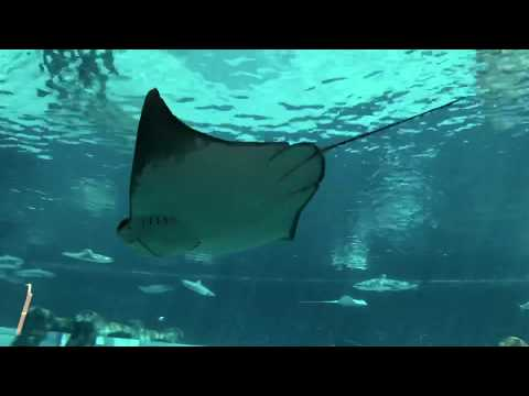 Atlantis the palm | Atlantis aquarium 2019