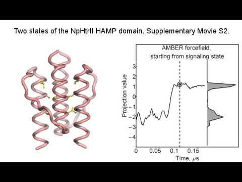 Two Distinct States of the NpHtrII HAMP Domain - Movie 2