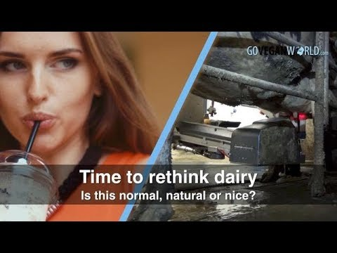 Rethinking Dairy: Fact or Fad