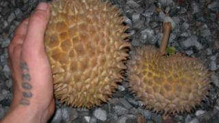 Durianrider's home delivery durian! #7