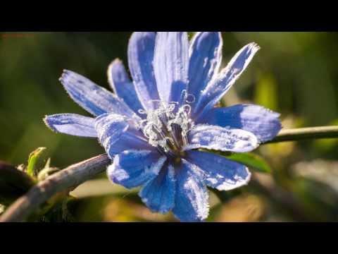 Hoa nở