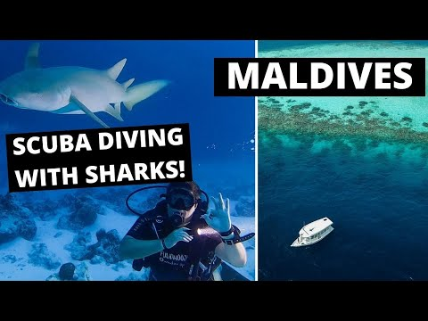 SHARK AND TURTLE RESCUE: on our dive boat in Maldives