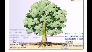 Introduction to plant hormones