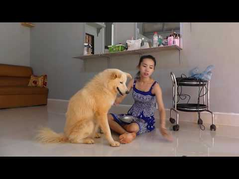 LOVELY SMART GIRL PLAYING BABY CUTE DOGS AT HOME HOW TO PLAY WITH DOG & FEED BABY DOGS #3