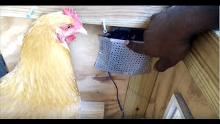 Backyard Chicken Coop Tour And Tips - Easy Feeding, Watering And Cleaning Setup.