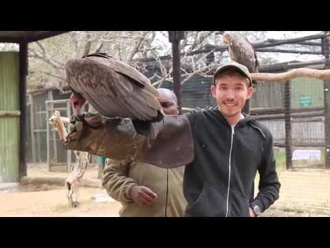 14.09.16 Moholoholo Widlife Rehabilitation Centre - Vultures