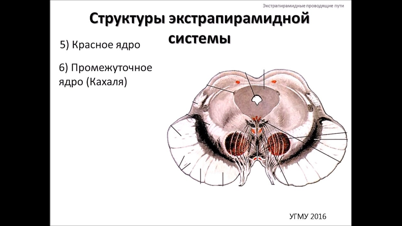 ekstrapiramidinė hipertenzija)