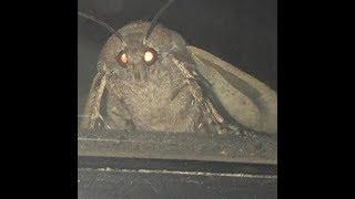 moth lamp memes compilation