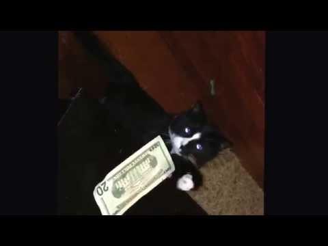 The 3-legged Cat Burglar