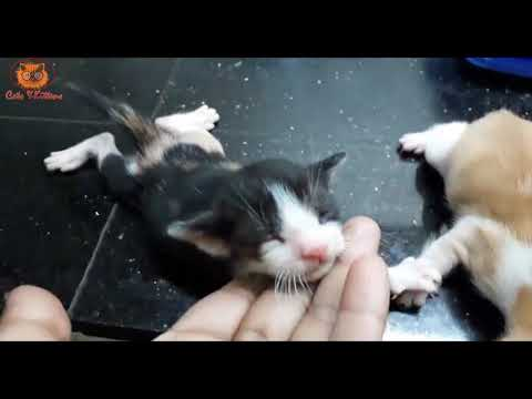 Little cute cat Love history  - cute cat play with owner -  cats and kittens video