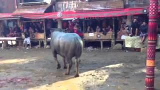 Pattinggoro, Rambu Sollo' Tana