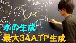 高校 生物 電子伝達系(呼吸の第3ステップ) electron transport system (respiration③) with subtitles