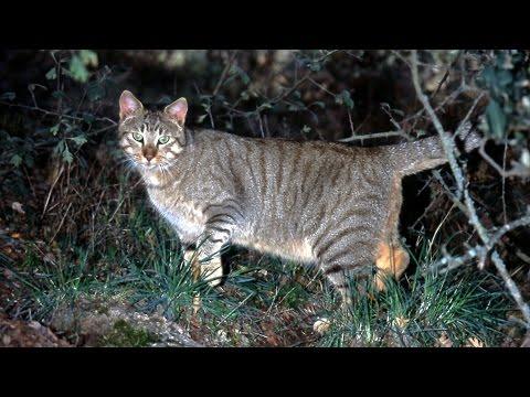 Fauna de nuestros bosques y montañas