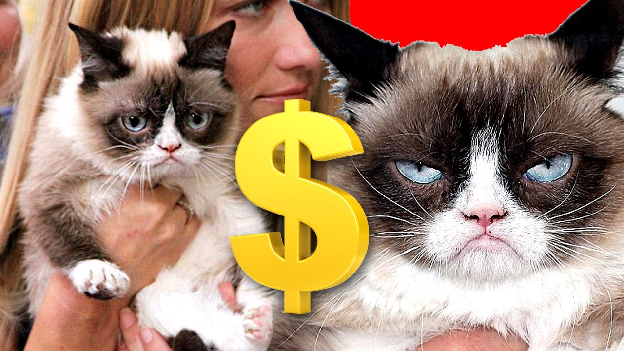 Image result for Grumpy Cat - 99.5 million dollars