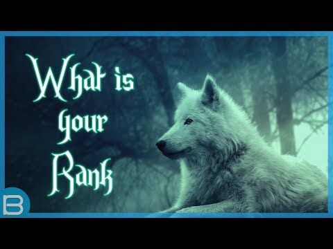 What Is Your Rank In A Wolf Pack?