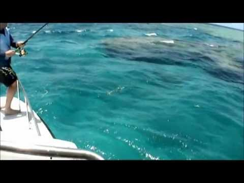 How To Fish A Reef Fishing Tips!!