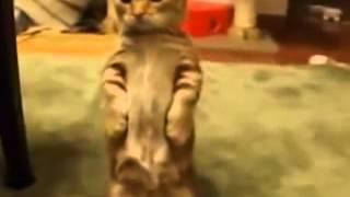 приколы кошки смешные топ видео 2014 животные кошки 19